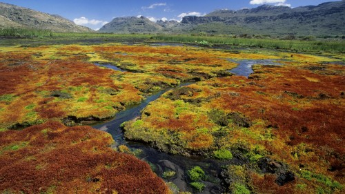 Cedarberg Wilderness Area, colourful mosses growing in vlei, Northern Cape, South Africa